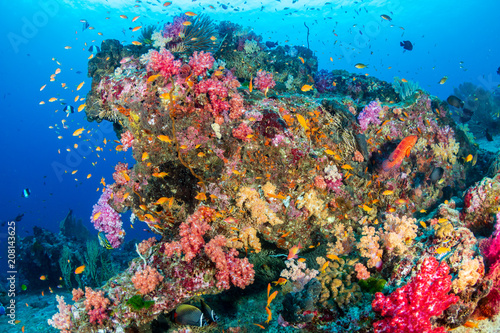 Fototapety, obrazy: Colorful tropical fish swim around a healthy coral reef