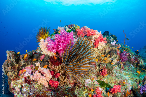 Poster Coral reefs Colorful tropical fish swim around a healthy coral reef
