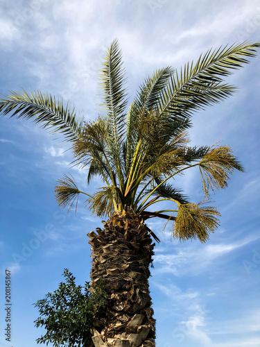 Spoed Foto op Canvas Palm boom Palm trees against blue sky, Palm trees on tropical coast coconut tree, summer tree.