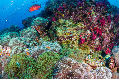 Papiers peints Recifs coralliens Colorful tropical fish swim around a healthy, thriving coral reef