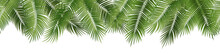 Vector Seamless Summer Palm Le...