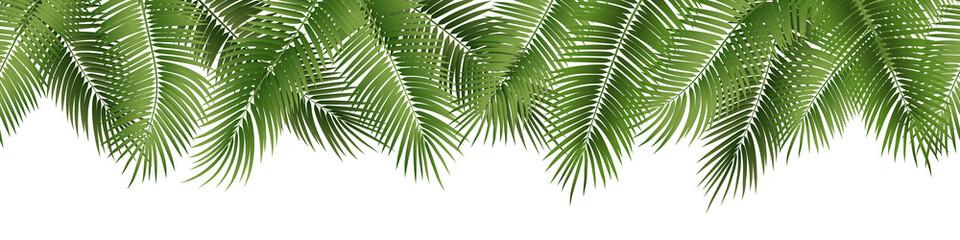 Vector bešavno ljetno lišće palme na bijeloj pozadini.