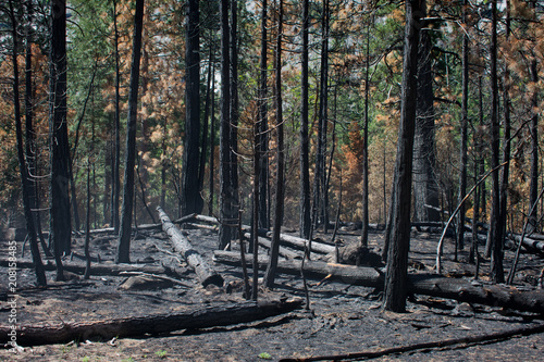 Spoed Foto op Canvas Natuur Park Forest fire at Kings Canyon National Park