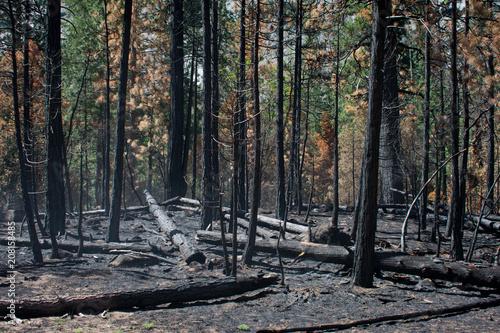 Papiers peints Parc Naturel Forest fire at Kings Canyon National Park