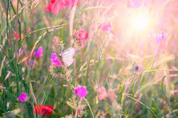 Obraz un papillon au milieu de fleurs des champs avec le soleil en fond