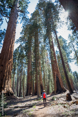 Poster Natuur Park trail in sequoia national park in late May, 2018