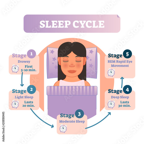 Healthy human sleep cycle vector illustration diagram with female in bed and sleep stages Wallpaper Mural