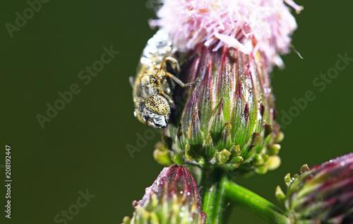 Fotobehang Macrofotografie The gadfly, taken in the wild