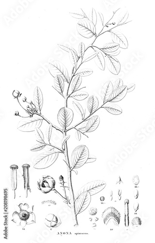 Fototapety, obrazy: Illustration of plant