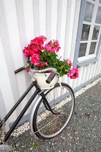 Foto op Plexiglas vélo fleuri au bord de la cabane ostreicole