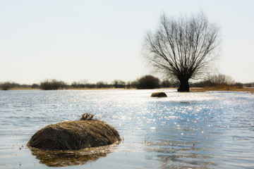 Zulawy meadow near Gdansk flooded by Vistula high water