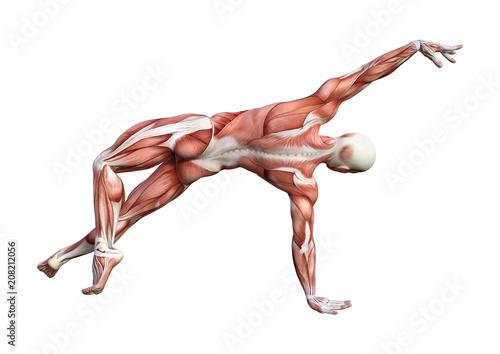 Fotografie, Obraz  3D Rendering Male Anatomy Figure on White