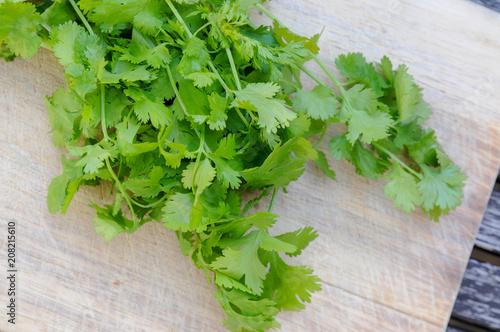 Sommerküche Kaufen : Koriander grüne bund kochen gewürze sommerküche u2013 kaufen sie dieses