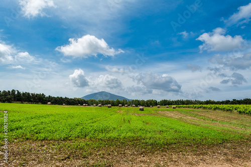 Tuinposter Canyon Landscape of field with bales of hay and vineyard