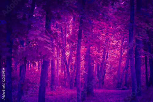 Trendy color ultra violet concept. Ultraviolet trees foliage abstract background. - 208219810