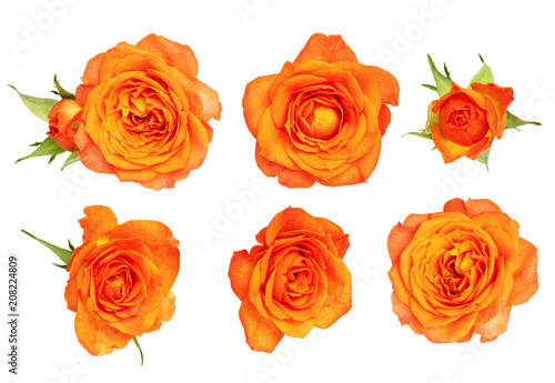 Foto op Canvas Madeliefjes Set of orange rose flower and leaves