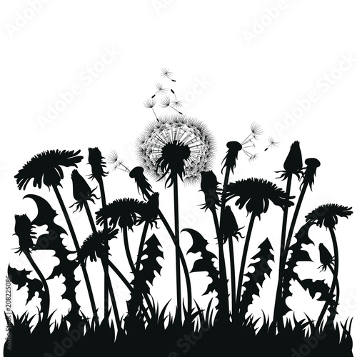 Fotobehang Bloemen zwart wit Field of dandelion flowers. Black silhouettes of summer plants on a white background. The outline of a glade with dandelions and flying birds. Illustration for children. Vinyl sticker on the wall.