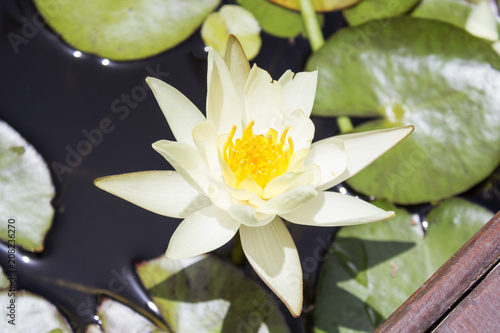 Fotobehang Waterlelies Small quiet pond with water lilies and other plants