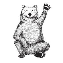 Sketch Of A Waving Bear. Vector Illustration