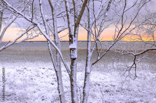 Fotobehang Purper First snow landscape from Sotkamo, Finland.
