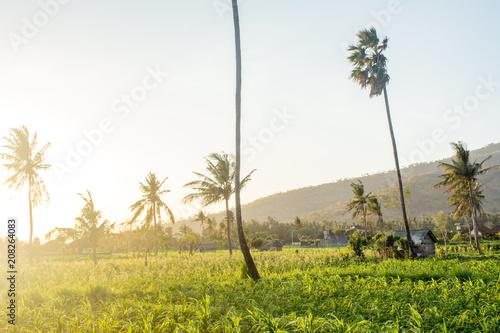 Fotobehang Wit palms in a field