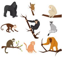 Flat Vector Set Of 9 Species O...