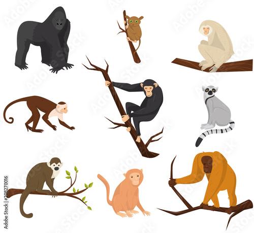 фотография Flat vector set of 9 species of monkeys