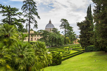 View At St Peter's Basilica (Basilica Di San Pietro) From Vatican Gardens With Beautiful Green Lawns, Pines And Palm Trees, Rome, Italy.