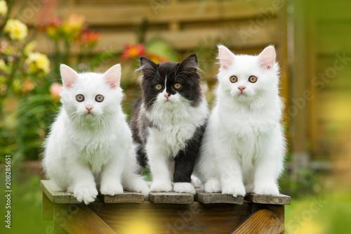 Kätzchen auf einem Hocker im Garten Wallpaper Mural