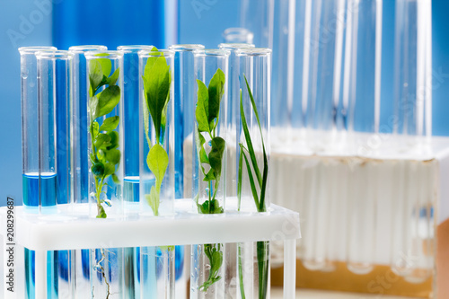 Poster Vegetal Green fresh plant in test tube with blue water in laboratory.