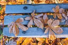 Kastanienblätter Mit Raureif Auf Der Alten Holzbank