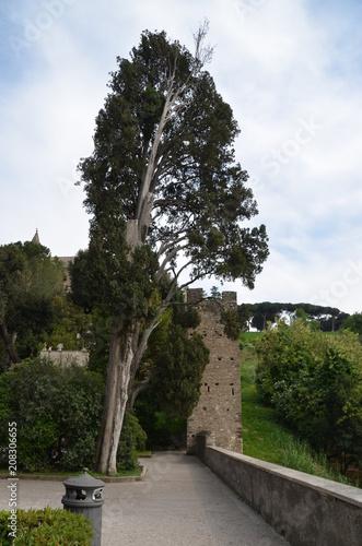 Fotobehang Wit landscape tree