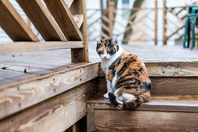 Calico Cat Curious Exploring H...