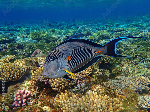 Staande foto Koraalriffen OLYMPUS DIGITAL CAMERA