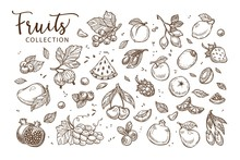 Natural Tasty Fruits Collection Of Monochrome Sepia Sketches