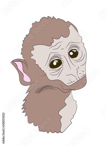Fototapety, obrazy: monkey portrait,  vector