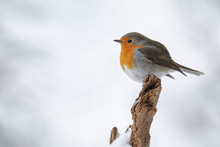 A Simple Robin