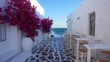 Fototapeta  - Photo of beautiful bougainvillea flower with awsome colors in picturesque Greek island with deep blue waves
