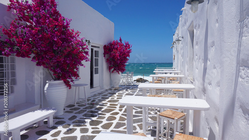 Fototapeta Photo of beautiful bougainvillea flower with awsome colors in picturesque Greek island with deep blue waves        obraz
