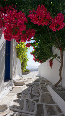 Fototapeta Popularne Photo of beautiful bougainvillea flower with awsome colors in picturesque Greek island with deep blue waves