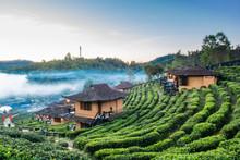 Tea Plantation And Hut In Ban Rak Thai. Mae Hong Son, Thailand.