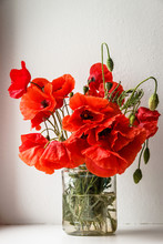 Red Poppies In A Jar With Water