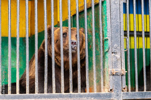 Foto  Bear in captivity in a zoo behind bars