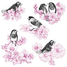 Set Of Birds Hand Drawn In Vin...