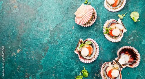 Valokuva Raw opened shellfish scallops on turquoise background