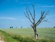 Trockenheit Toter Baum Klimawandel Deutschland