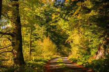 Forêt Automnale Et Petite Route