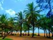 Tropical beach with palms, Sri Lanka