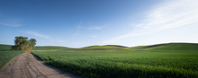 Rural Gravel Road With Green Field In The Palouse