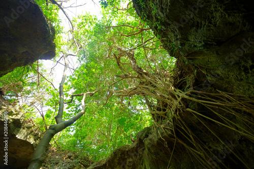 Fototapeta 石垣島の鍾乳洞 obraz na płótnie